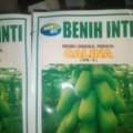 Jual Benih Pepaya Calina ( IPB-9) 100 % Asli Dari IPB
