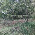 Jual Tanah cocok untuk pembangunan cluster 1200 Meter  | Tanah Kebun