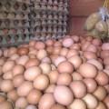 Jual Telur Ayam Mentah