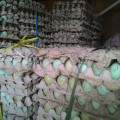 Jual telur bebek