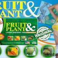 WA 0822 2828 0303 Jual Fruit & Plant Pelangsing Badan Di Jogja